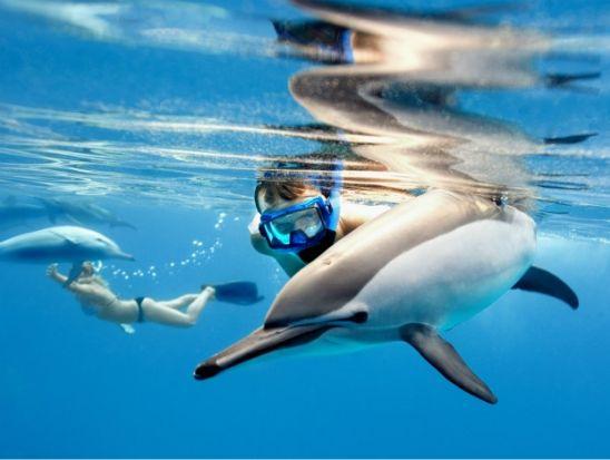 """EXPERIENCE DANS LA MER ROUGE, """"nage avec les dauphins"""""""