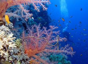 buceo-mar-rojo-derek-keats